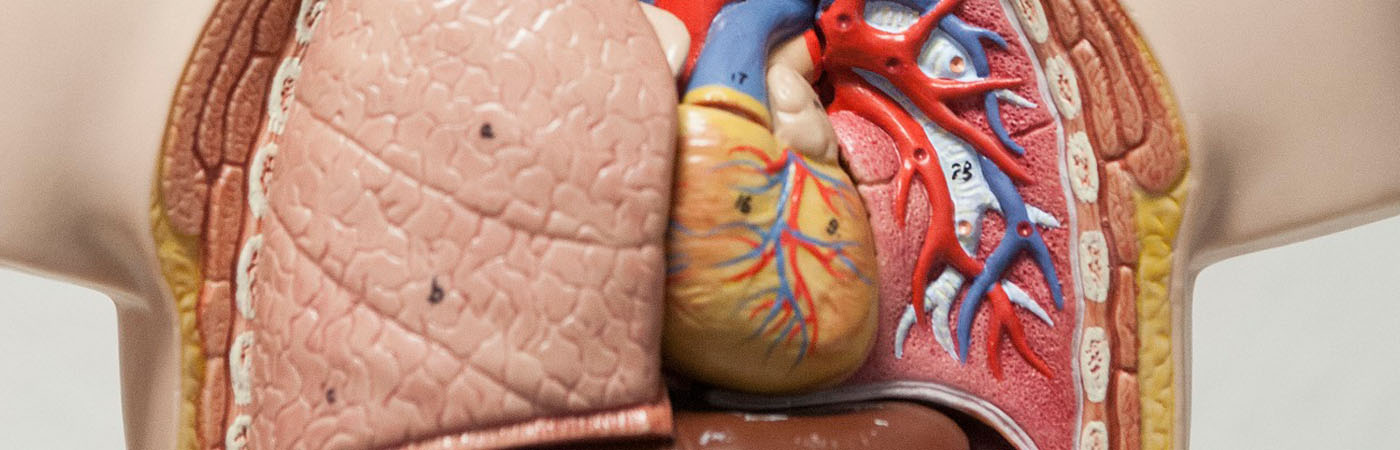 British Heart Foundation PhD Programme
