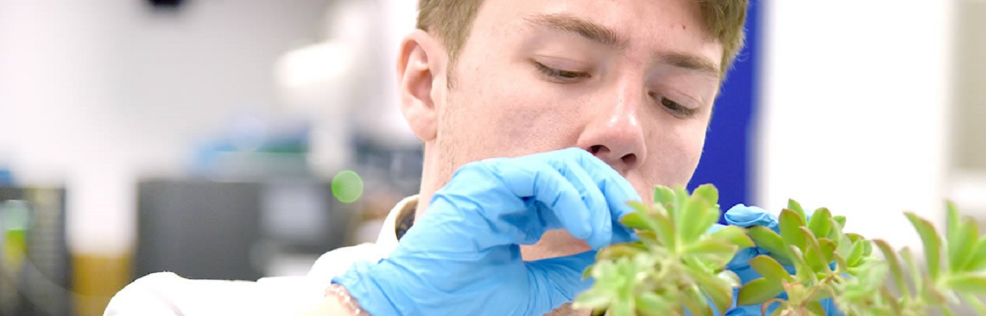 BSc Plant Science at The University of Manchester
